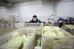 ضمان امدادات الخضراوات خلال مكافحة وباء فيروس كورونا الجديد .jpg