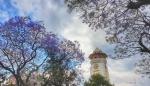 تفتح الزهور في كاتماندو، نيبال .jpg