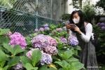 تفتح زهور الكوبية الجميلة في مدينة طوكيو اليابانية .jpg