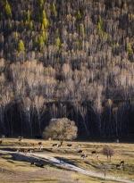 المناظر الخريفية في مدينة تشنغده بمقاطعة خبي شمالي الصين .jpg