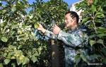 زراعة زهور الكاميليا تساعد على زيادة دخول الفلاحين في مدينة جينهوا بمقاطعة تشجيانغ بشرق الصين .jpg